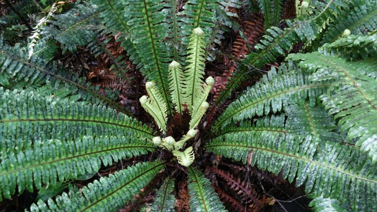 new zealand travel nouvelle zelande middle earth terre du milieu fern koru forest
