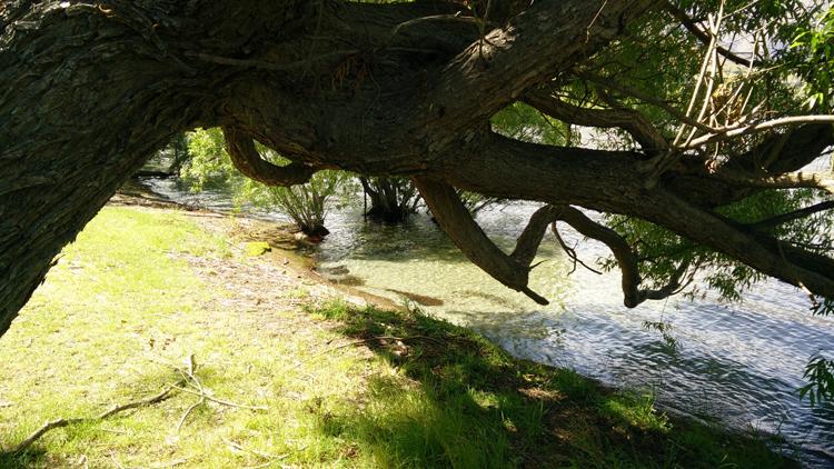 new zealand travel nouvelle zelande middle earth terre du milieu lake hayes trees
