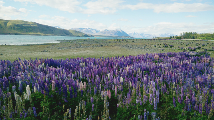 new zealand travel nouvelle zelande middle earth terre du milieu lake tekapo