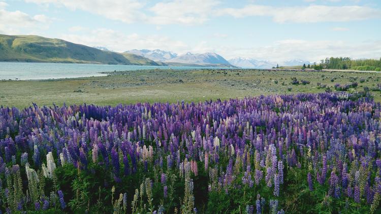 new zealand travel nouvelle zelande middle earth terre du milieu lake tekapo