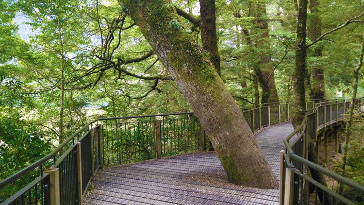 new zealand travel nouvelle zelande middle earth terre du milieu respect nature tree milford
