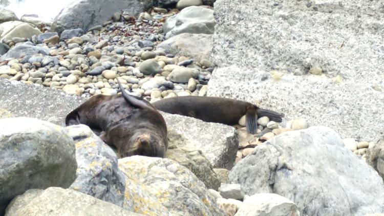 new zealand travel nouvelle zelande middle earth terre du milieu seals kaikoura point