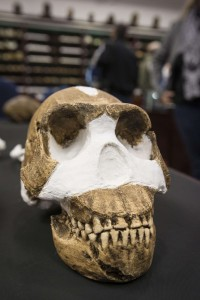 Homo Naledi photo