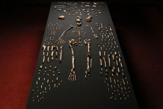 Homo Naledi photo2