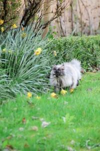 angora turc jardin