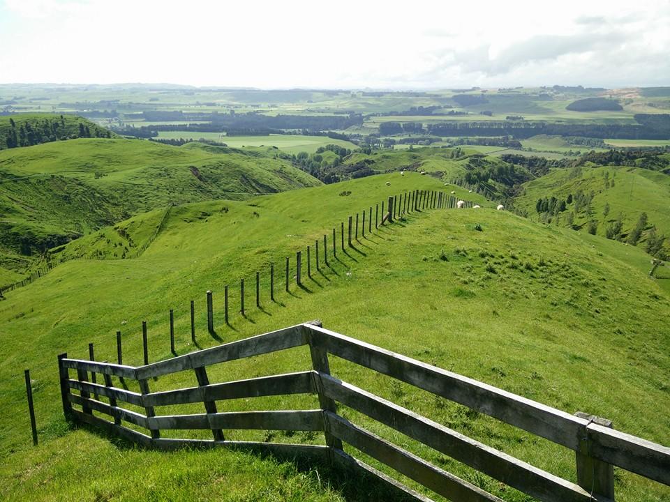 plaines collines nouvelle zelande terre du milieu moutons hobbiton