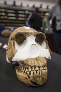 Homo Naledi photo