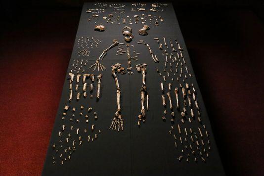 Homo Naledi photo2